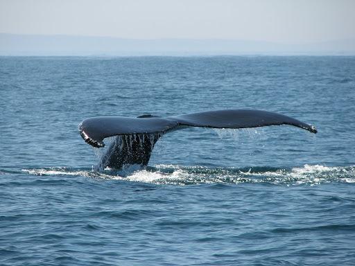 Whale Cove. Mile3480