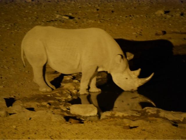 Rhino! Ooh!